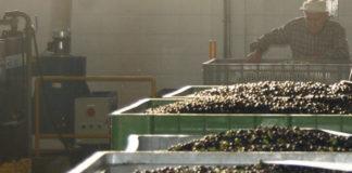 IGP Roma, un marchio per l'olio extravergine di qualità