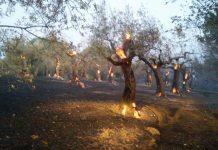 Incendio a Tivoli Colli di Santo Stefano