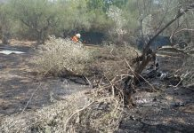 Incendi a Tivoli, il terreno ai Colli di Santo Stefano distrutto dal fuoco