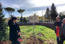 L'albero di Mario al parco Sogno di Malala