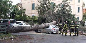 La vettura schiacciata dall'albero