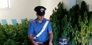 MONTEROTONDO - Le piante e le armi sequestrate (2)