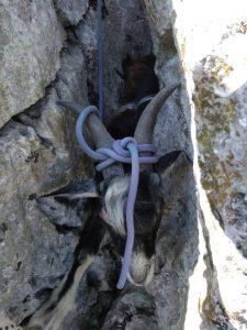Il povero animale incastrato tra due rocce in montagna