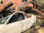 L'albero caduto a via Tiburto